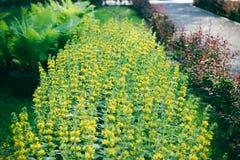 Arbusto bonito no parque Foto de Stock Royalty Free
