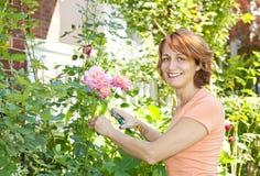 Arbusto color de rosa de la poda de la mujer Imagen de archivo libre de regalías