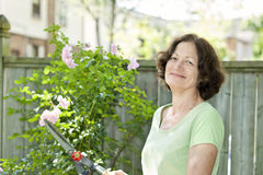 Arbusto color de rosa de la poda mayor de la mujer Fotografía de archivo libre de regalías
