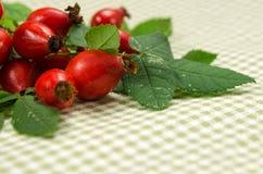 Arbusto color de rosa salvaje, servilleta a cuadros en la tabla Foto de archivo libre de regalías