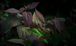 Arbusto colorido fotos de archivo libres de regalías