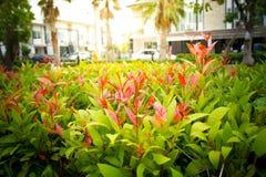 Arbusto com luz na manhã Foto de Stock Royalty Free