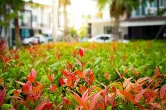 Arbusto com luz na manhã Fotografia de Stock Royalty Free