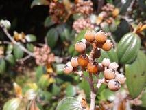 Arbusto con las frutas secas fotos de archivo