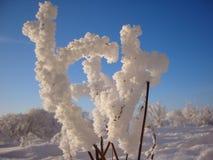 Arbusto congelado como una mano cubierta con escarcha foto de archivo libre de regalías