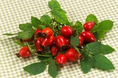 Arbusto cor-de-rosa selvagem, guardanapo quadriculado na tabela Imagens de Stock Royalty Free