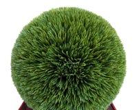 Arbusto cortado artificial del boj imagen de archivo