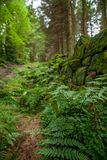 Arbusto da floresta Foto de Stock Royalty Free