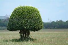 Arbusto dado forma no campo fotografia de stock