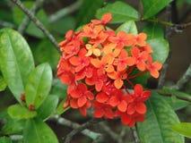 Arbusto de flores Стоковые Фотографии RF