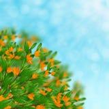 Arbusto de florescência Fotos de Stock Royalty Free