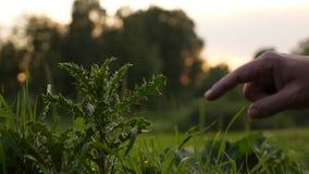 Arbusto de la espina del tacto del finger del hombre metrajes