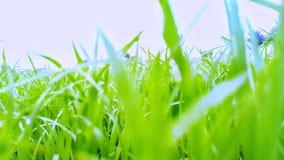 Arbusto de la hierba fotos de archivo