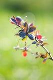Arbusto de la rama en luz del sol Imagen de archivo libre de regalías