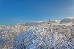 Arbusto de las ramas de la nieve del invierno, altos pantanos, Bélgica Fotos de archivo