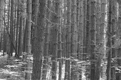 arbusto de los troncos Foto de archivo libre de regalías