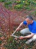 Arbusto de poda do homem Foto de Stock Royalty Free