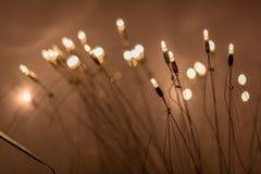 Arbusto del bulbo Foto de archivo libre de regalías