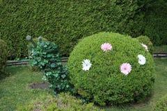 Arbusto del caracol Foto de archivo libre de regalías
