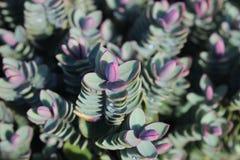 Arbusto del invierno Foto de archivo