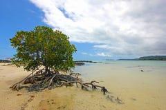 Arbusto del mangle en la isla Imagenes de archivo