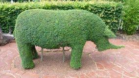 Arbusto del rinoceronte Fotos de archivo