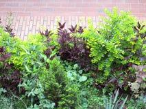 Arbusto del ` s del jardín Foto de archivo libre de regalías