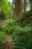 Arbusto del terreno boscoso Fotografia Stock Libera da Diritti