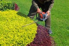 Arbusto della guarnizione del giardiniere con la cesoia per tagliare le siepi Immagine Stock