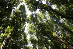 Arbusto della natura del parco dell'albero fotografia stock