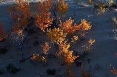 Arbusto in deserto Fotografia Stock Libera da Diritti
