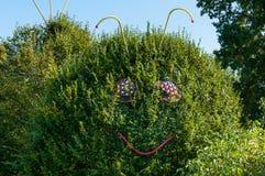 Arbusto do caracol Fotografia de Stock