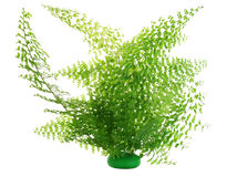 Arbusto do Fern isolado imagens de stock royalty free