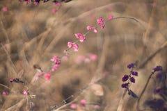Arbusto do inverno do vintage Imagem de Stock