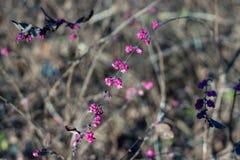 Arbusto do inverno do vintage Fotos de Stock Royalty Free
