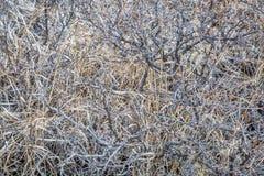 Arbusto e hierba secos Imagen de archivo