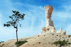 Arbusto e picco roccioso bianco al canyon di Bryce, S.U.A. Fotografia Stock Libera da Diritti