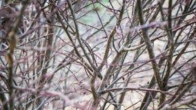Arbusto ed arto di morte Fotografia Stock Libera da Diritti