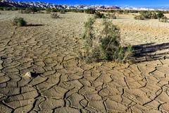Arbusto en el desierto con tierra agrietada en un fondo de montañas Imagen de archivo