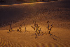 Arbusto espinoso secado en el desierto foto de archivo