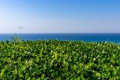 Arbusto grampeado verde contra o mar do céu foto de stock royalty free