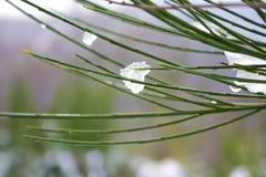 Arbusto helado del invierno Foto de archivo libre de regalías