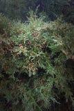 Arbusto hermoso brillante Foto de archivo