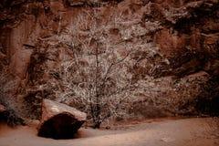 Arbusto inoperante no deserto Fotos de Stock Royalty Free