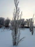 Arbusto joven Foto de archivo