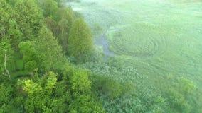Arbusto luxúria da árvore verde nevoenta da opinião aérea do pântano da névoa filme