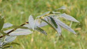 Arbusto mojado metrajes