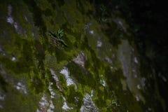Arbusto mojado en bosque Imagen de archivo