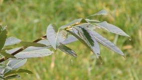 Arbusto molhado filme