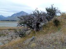 Arbusto muerto antes de un llano estéril y de montañas del río Foto de archivo libre de regalías